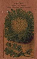 Sachet De Graines - Semis Pour Salade Chicorée (Frisée De Meaux, Belle Lyonnaise, Petite Simone) - 2. Semillas