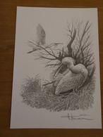 Buzin Tekening A4 Lepelaar - 1985-.. Birds (Buzin)