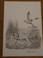 Buzin Tekening A4 Kluut - 1985-.. Birds (Buzin)