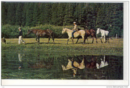 CHEVAL, HORSE, PFERD - Huntig And Fishing - Reflections Along The Trail - Horses