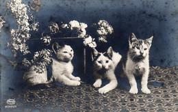 DC900 - Schöne Motivkarte Katzen Cats Cat Katze - Gatos