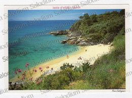 ISOLA D'ELBA Cavoli -  XXL CARD - Big Format - Livorno