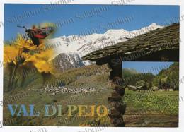 FIORE FIORI FLOWER FLOWERS - VAL DI PEJO  TRENTO TENTINO PARCO NAZIONALE DELLO STELVIO -  XXL CARD - Big Format - Trento