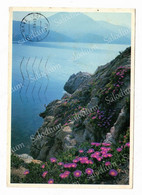 ISOLA D'ELBA -  XXL CARD - Big Format - Livorno
