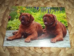 Hund Dog Postkarte Bordeaux.Dogge - Dogs