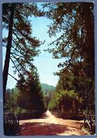 °°° Cartolina - La Sila La Fossiata-foresta Nuova (l) °°° - Cosenza