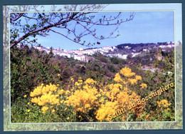 °°° Cartolina - Bocchigliero Panorama Viaggiata (l) °°° - Cosenza