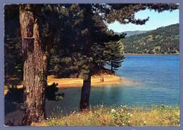 °°° Cartolina - Bellezze Di Calabria Sila Lago Ampollino Viaggiata (l) °°° - Catanzaro