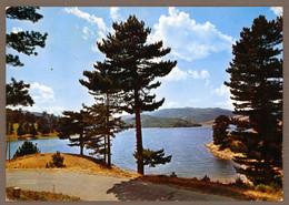 °°° Cartolina - Bellezze Di Calabria La Sila Scorcio Panoramico Del Lago Arvo Viaggiata (l) °°° - Catanzaro