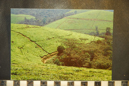 CP, BURUNDI,  Plantation De The A TEZA, 20 - Burundi