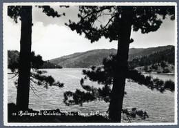 °°° Cartolina - Bellezze Di Calabria Sila Lago Cecita Viaggiata (l) °°° - Cosenza