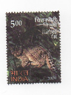 Inde India 2009 - YT 7069 - Chat Sauvage Marbré - Oblitéré - Used - Used Stamps