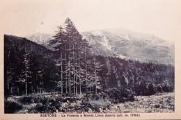 Cartolina - Abetone - La Foresta E Monte Libro Aperto - 1931 - Pistoia