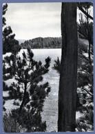 °°° Cartolina - Cosenza Lago Moccone In Sila Viaggiata (l) °°° - Cosenza