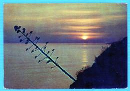 °°° Cartolina - Cretaro Marina Tramonto Viaggiata (l) °°° - Cosenza