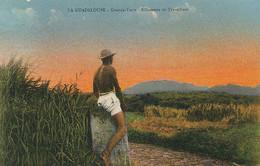 Guadeloupe Grande Terre Silhouette De Travailleur Coupeur De Canne à Sucre Sugar Cane . Nude Balck Worker - Paesani