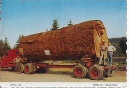 Cpsm- Industrie Du Bois- Forêts D'Oregon And Washington-voir Exp.dos-écrite Voyagée -édit: Anderson's - Industrie