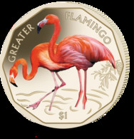 British Virgin Islands Coin 2019 - Greater Flamingo - British Virgin Islands