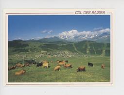 Le Col Des Saisies, Vallée Du Beaufortain, Station Olympique (alpage Vache) Cp Vierge N°11 Seca - Other Municipalities