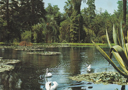 (D658) - CASERTA - Palazzo Reale, Giardino Inglese E Lago - Caserta