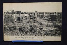 D-159 / Vilmorin-Andrieux & Cie - Etablissement De Verrières Récolte Du Champ D'expériences Des Blés / 1924 - Verrieres Le Buisson