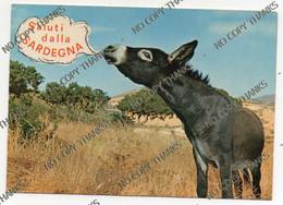 Saluti Dalla Sardegna - Asino Mule Donkey - Other Cities