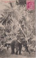 SRI LANKA (Ceylon) - Elephant Passing Through Native Village - Used VG Rear Etc 1906 - Sri Lanka (Ceylon)