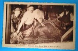 Carte Postale Ancienne -  Au Pays Minier -descente D'un Cheval Dans La Mine ( 2 è Phase ). - Mijnen
