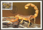 Portugal Carte Maximum Timbre Personnalisé Scorpione Arachnide 2011 Personalized Stamp Scorpion Arachnida Maxicard - Spinnen