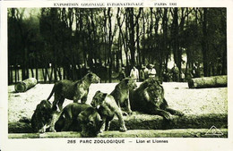 ► Exposition Coloniale Paris 1931 Zoo Lion Et Lionne - Vincennes - Tentoonstellingen