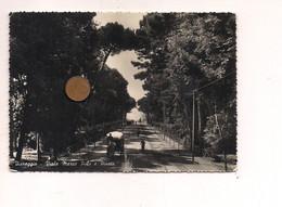 M9873 Toscana VIAREGGIO LUCCA 1948 Viaggiata - Viareggio