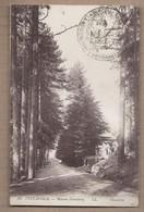 CPA 20 - VIZZAVONA - Maison Forestière - TB PLAN Route Dans Bois Edifice Métier Bois TAMPON MILITAIRE Recto Verso - Sonstige Gemeinden