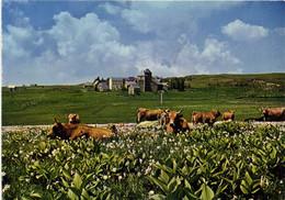 AUBRAC  Tette D'espoir L'Estive Vaches Dans Un Près De Jonquilles Et De Gentiannes Au Loin Village D'Aubrac RV - Zonder Classificatie