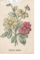 DAHLIA  SIMPLE - B. Bloemplanten & Bloemen