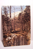 GAP    - CHARANCE  NATURE  - Parc International De Découverte  - Ruisseau   -  ( Pas De Reflet Sur L'original ) - Gap