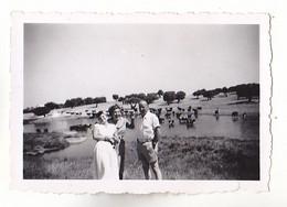 PHOTO FORMAT 8 X 6      EN ESPAGNE  AUX ENVIRONS DE SALAMANQUE  LES TAUREAUX  BUVANT  MARE     AOUT 1952  VOIR VERSO - Anonieme Personen