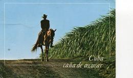 CUBA CHAMP DE CANNE A SUCRE ET CAVALIER - Ohne Zuordnung