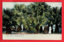 AFRICA  SUDAN   PALM TREES AT TEWEFEKIEH   W N - Sudan