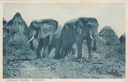 9957-SOMALIA ITALIANA-ELEFANTI-EX COLONIE ITALIANE-1936-FP - Somalia