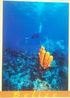 Belize Underwater - Belize