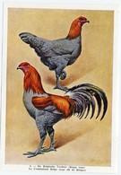 Fort - Hanen En Hennen - Coqs Et Poules - Roosters And Hens, Kippen, Poulets, Chickens - 5 - Unclassified