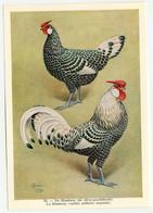 Fort - Hanen En Hennen - Coqs Et Poules - Roosters And Hens, Kippen, Poulets, Chickens - 28 - Unclassified
