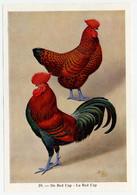 Fort - Hanen En Hennen - Coqs Et Poules - Roosters And Hens, Kippen, Poulets, Chickens - 29 - Unclassified