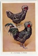 Fort - Hanen En Hennen - Coqs Et Poules - Roosters And Hens, Kippen, Poulets, Chickens - 35 - Unclassified
