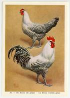 Fort - Hanen En Hennen - Coqs Et Poules - Roosters And Hens, Kippen, Poulets, Chickens - 36 - Unclassified