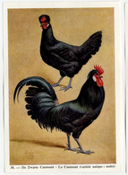 Fort - Hanen En Hennen - Coqs Et Poules - Roosters And Hens, Kippen, Poulets, Chickens - 38 - Unclassified