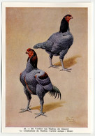Fort - Hanen En Hennen - Coqs Et Poules - Roosters And Hens, Kippen, Poulets, Chickens - 44 - Unclassified