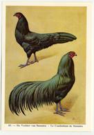 Fort - Hanen En Hennen - Coqs Et Poules - Roosters And Hens, Kippen, Poulets, Chickens - 45 - Unclassified