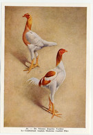 Fort - Hanen En Hennen - Coqs Et Poules - Roosters And Hens, Kippen, Poulets, Chickens - 46 - Unclassified