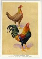 Fort - Hanen En Hennen - Coqs Et Poules - Roosters And Hens, Kippen, Poulets, Chickens - 49 - Unclassified